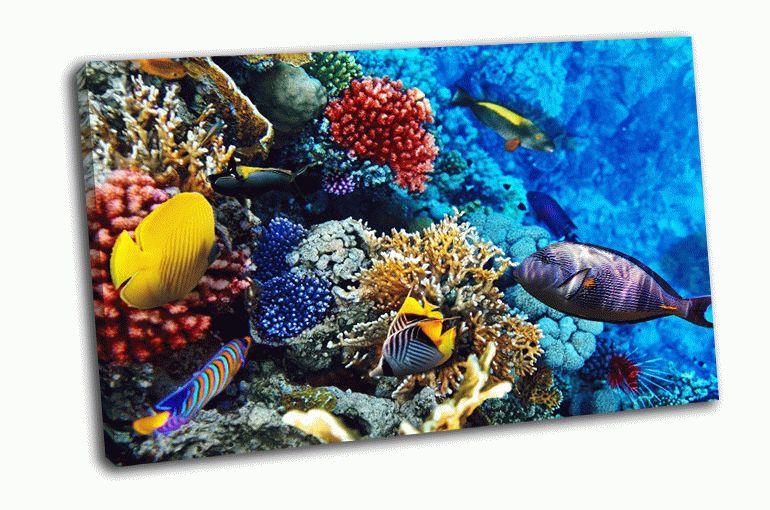 Более тысячи представителей разнообразных видов рыб и примерно видов кораллов являются жителями красного моря.
