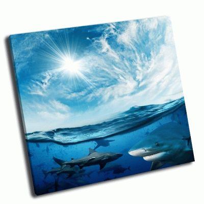 Картина акулы в море