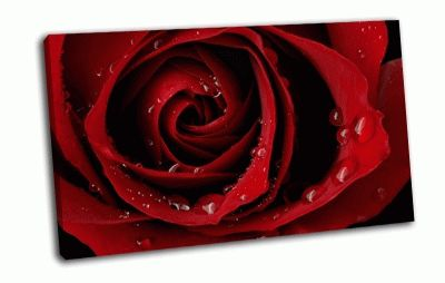 Картина алая роза