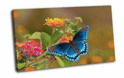 Картина бабочка-адмирал