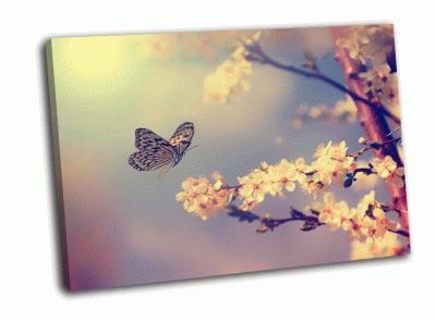Картина бабочка и цветок вишневого дерева