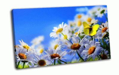 Картина бабочка на ромашке