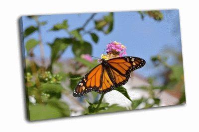 Картина бабочка на соцветии цветка