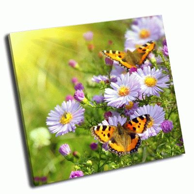 Картина бабочки на цветах