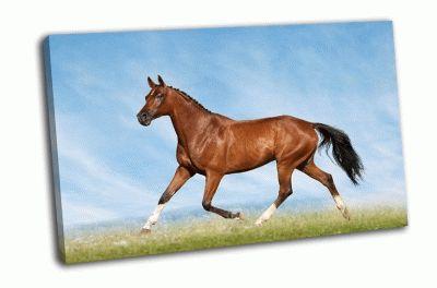 Картина бегущая лошадь в поле