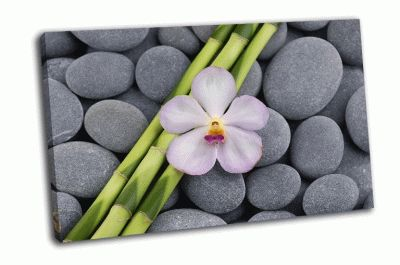 Картина белая орхидея с серой галькой
