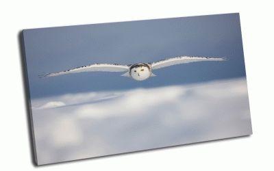 Картина белая сова в небе