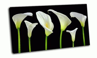Картина белые каллы на черном фоне