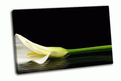 Картина белые каллы-отражение в воде