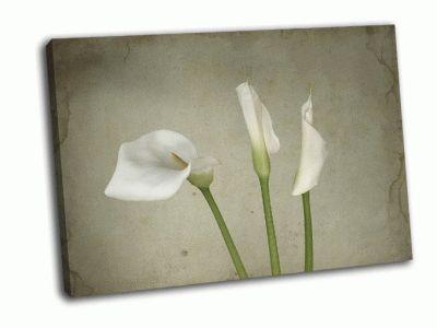 Картина белые каллы, текстурный фон