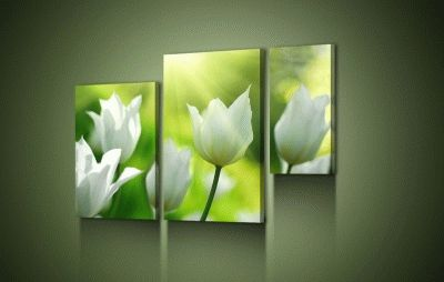 Картина белые тюльпаны