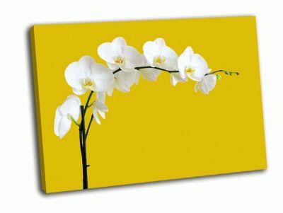 Картина белый цветок орхидеи