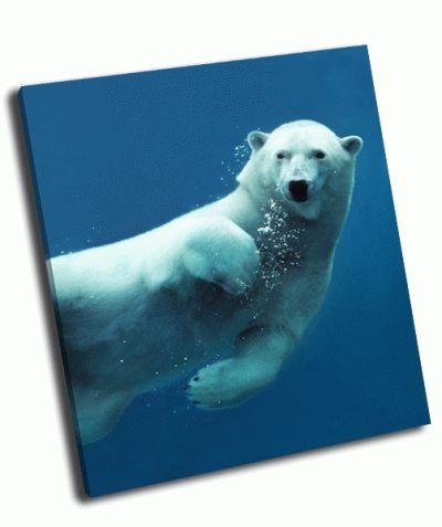 Картина белый медведь в воде
