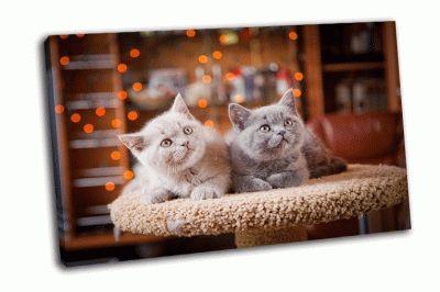 Картина британские кошки