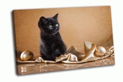 Картина британский черный котенок