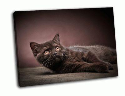 Картина британский котенок