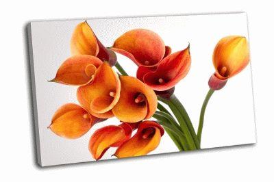 Картина букет из оранжевой каллы на белом фоне