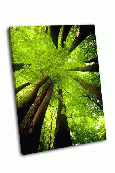 Картина буковый лес