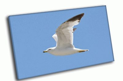 Картина чайка