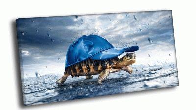 Картина черепаха в кепке