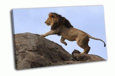 Картина черногривый лев на скале
