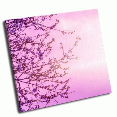 Картина цветение вишни на красивом розовом фоне