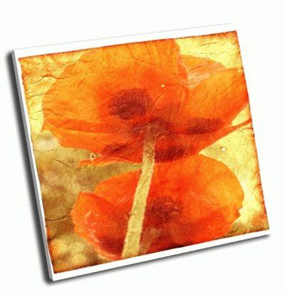 Картина цветочный гранж фон с двумя маками