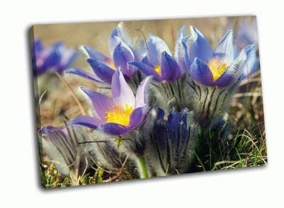 Картина цветок прострел