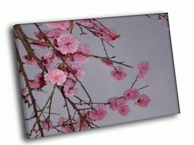Картина цветущая сакура