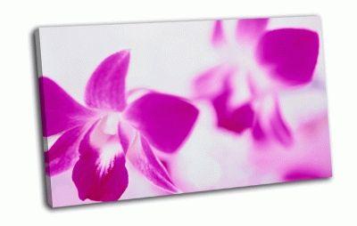 Картина цветы на белом  фоне