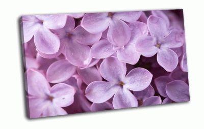 Картина цветы сирени