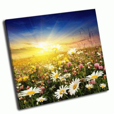 Картина цветы в поле на закате