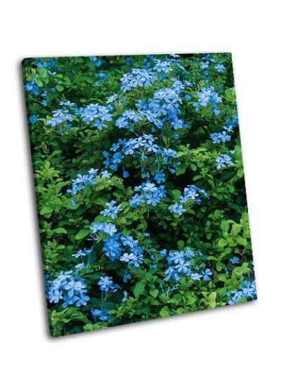 Картина цветы в саду