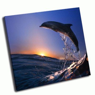 Картина дельфин на закате