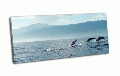 Картина дельфины на рассвете в тихом океане