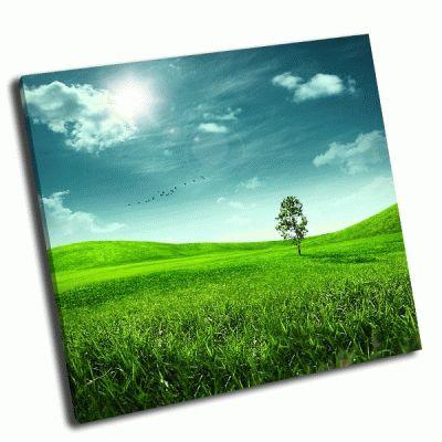 Картина дерево и зеленое поле