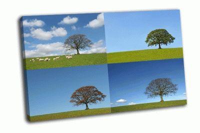 Картина дуб весной, летом, осенью