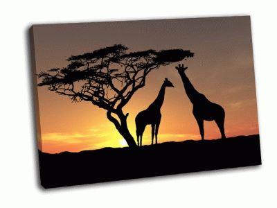 Картина два жирафа на восходе солнца