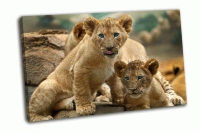 Картина два маленьких львенка
