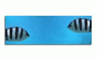 Картина две рыбы под водой