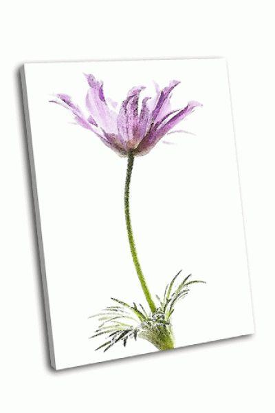 Картина фиолетовый прострел