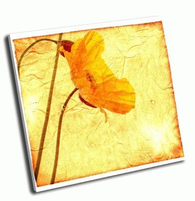 Картина фон с желтыми маками