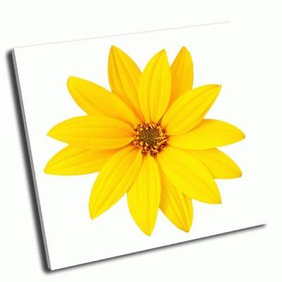 Картина желтый цветок на белом фоне