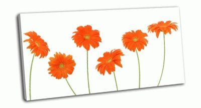 Картина герберы апельсинового цвета