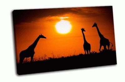 Картина жирафы на закате
