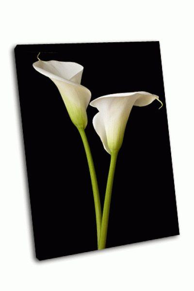 Картина калла лили на черном фоне