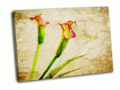 Картина каллы на коричневато-желтом фоне