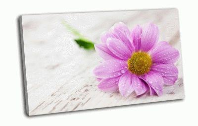 Картина капли воды на цветке