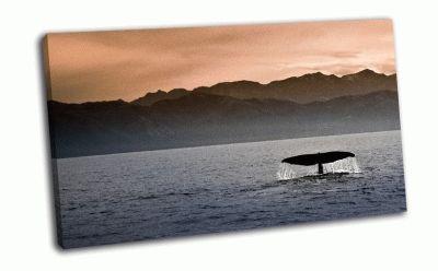 Картина кашалот перед побереже каикоура
