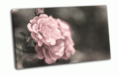 Картина хрупкие розы